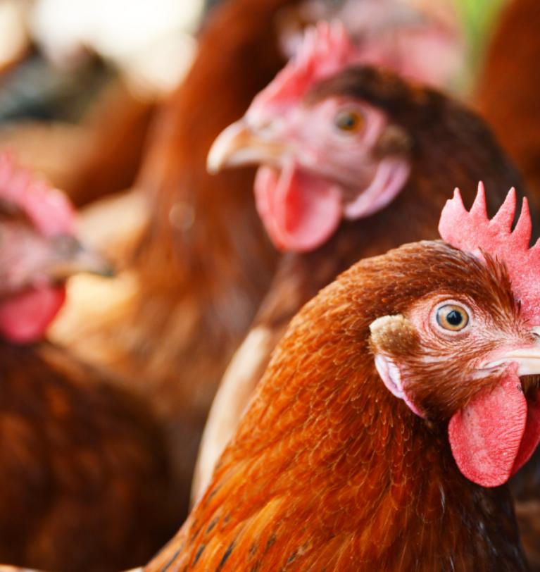 Los fitobióticos, clave en la alimentación de ganado