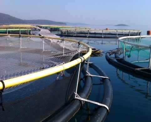 acuicultura-recortada.jpg