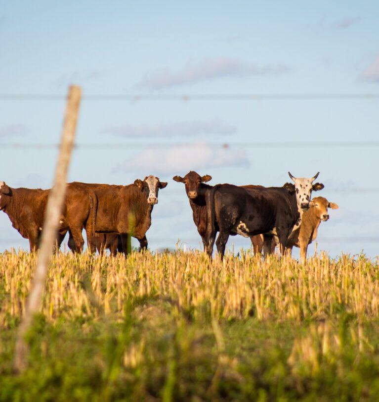 La lucha de la ganadería por reducir su huella medioambiental